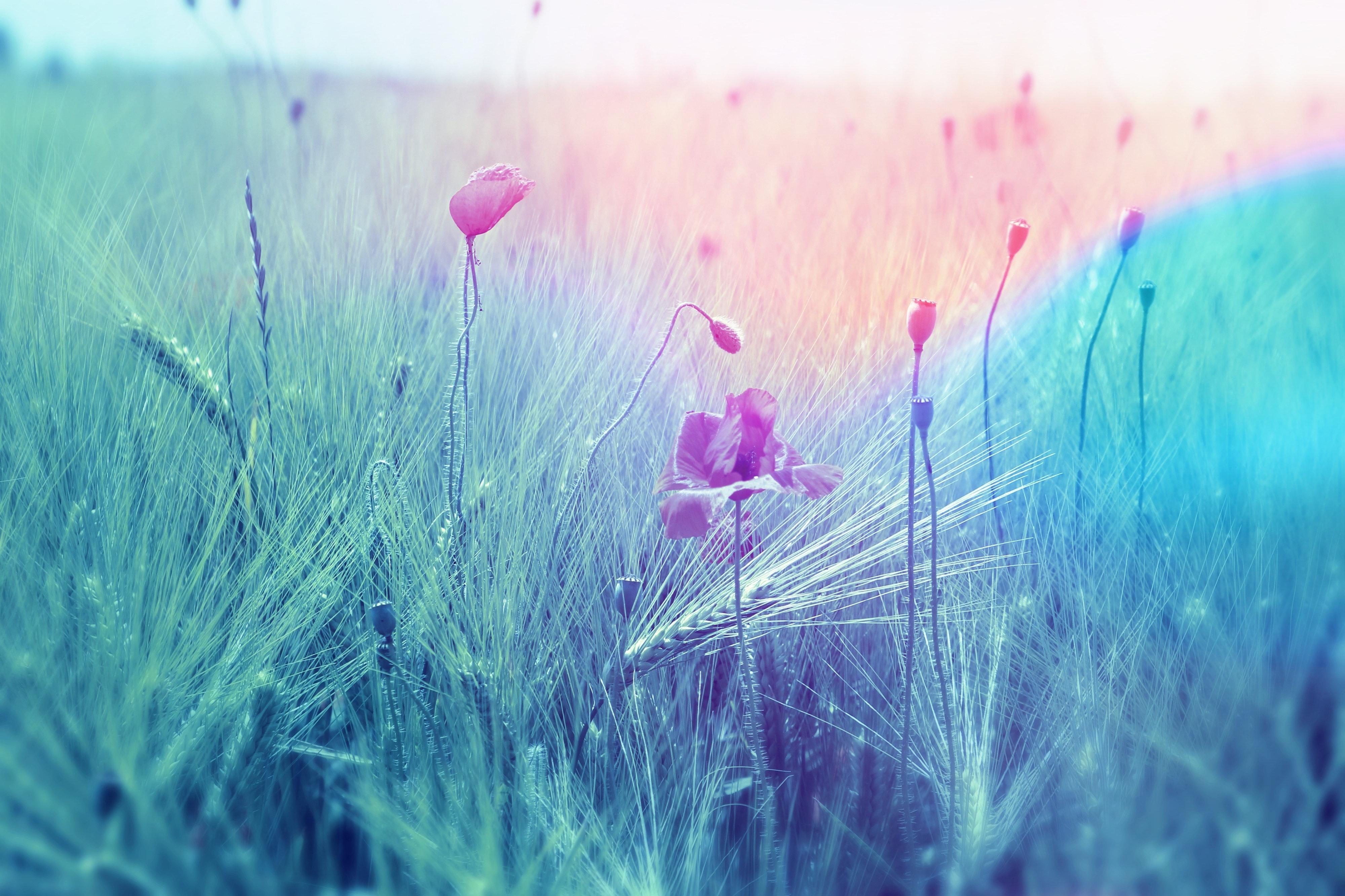 beautiful bloom blooming 459460