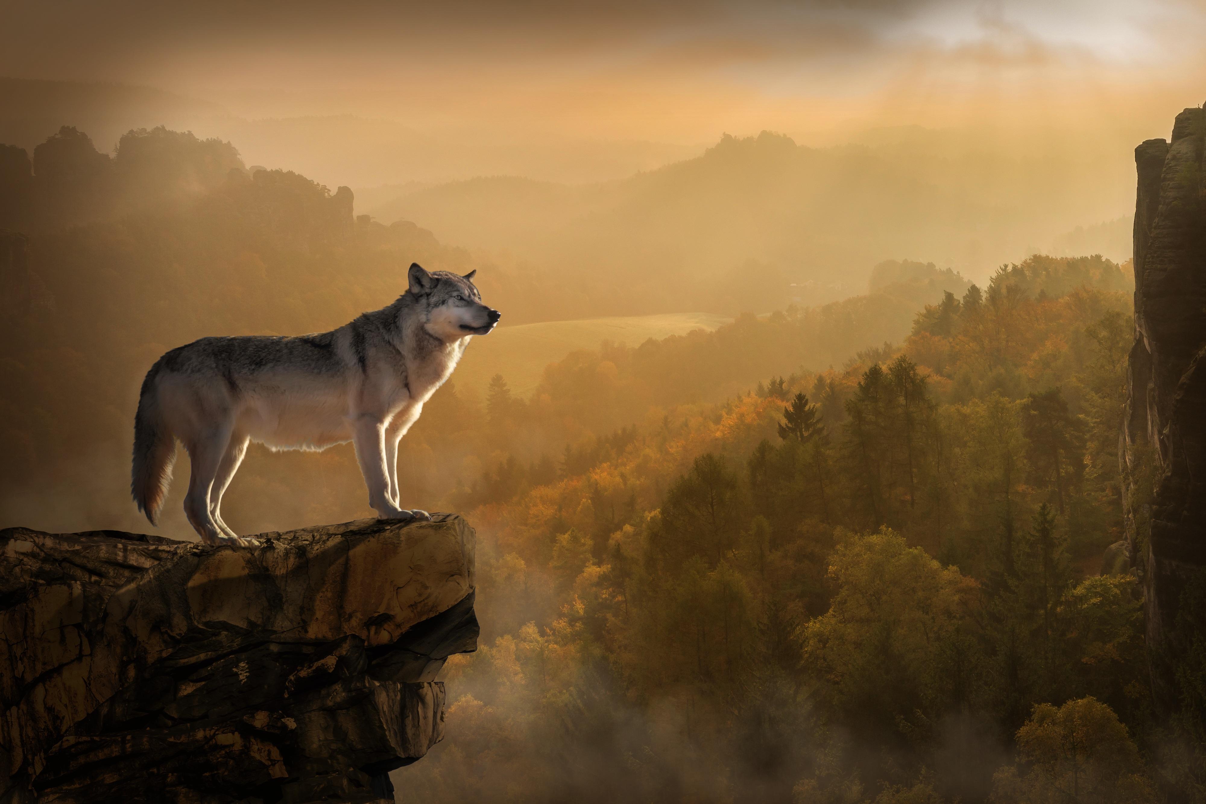Wolf rock precipice predator