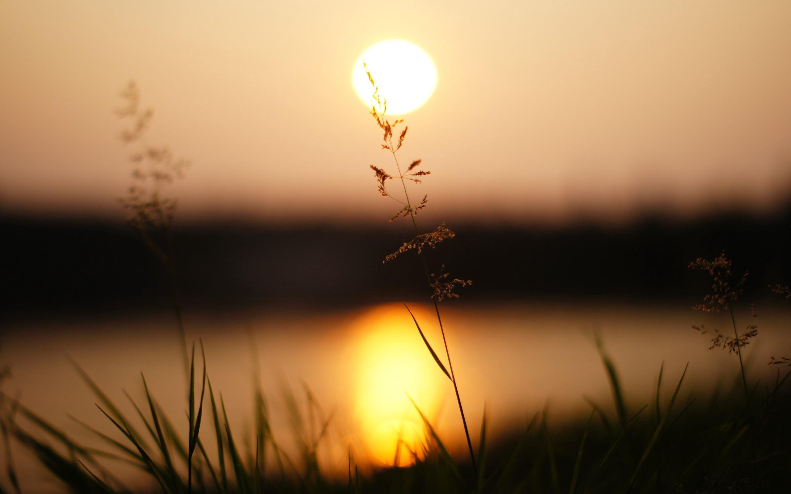 grass sunlight sunset