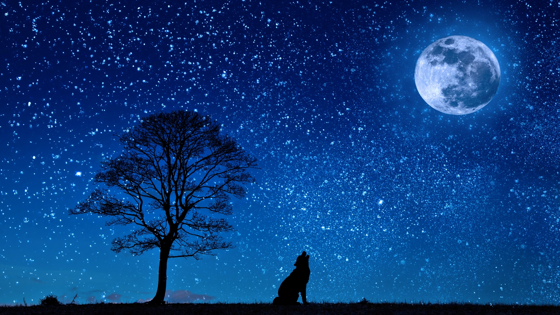 wolf starry sky tree moon